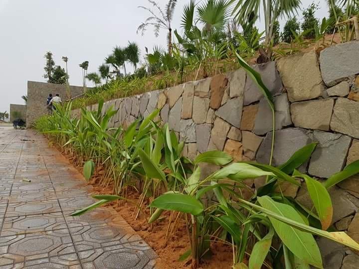 đá rối ốp tường rào